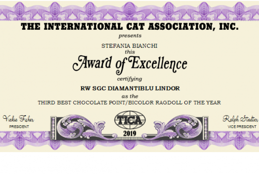 THIRD BEST CHOCOLATE POINT-BICOLOR RAGDOLL OF THE YEAR 2019